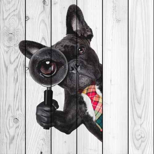 Картина на досках Собака с лупой
