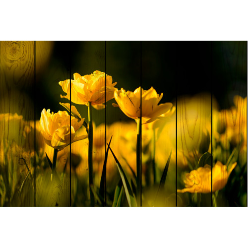 Картины на досках Желтые тюльпаны