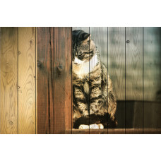 Картина на дереве Кошка на окне