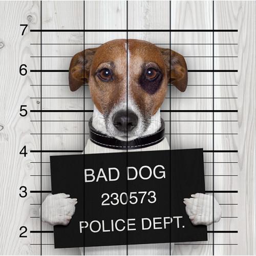 Картина на досках Плохая собака